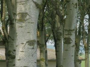 gli occhi negli alberi